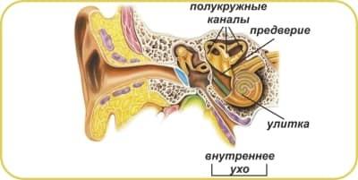 Воспаление внутреннего уха: симптомы и лечение отита