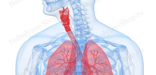Время ингаляции с Хлорофиллиптом в небулайзере: сколько проводить и как