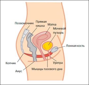 Опущение передней стенки матки