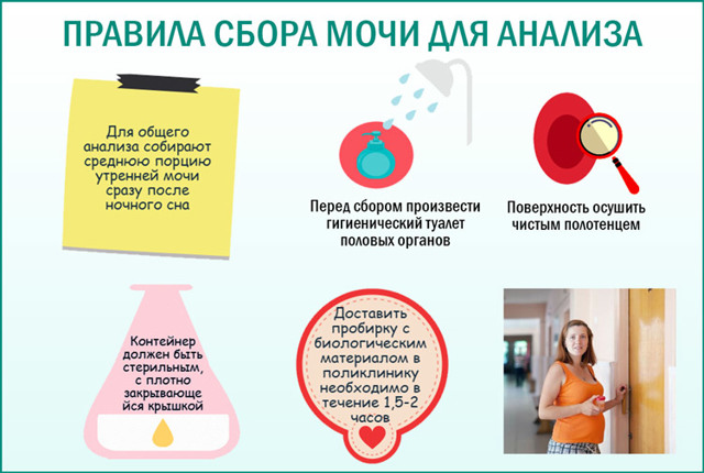 Цвет мочи при беременности