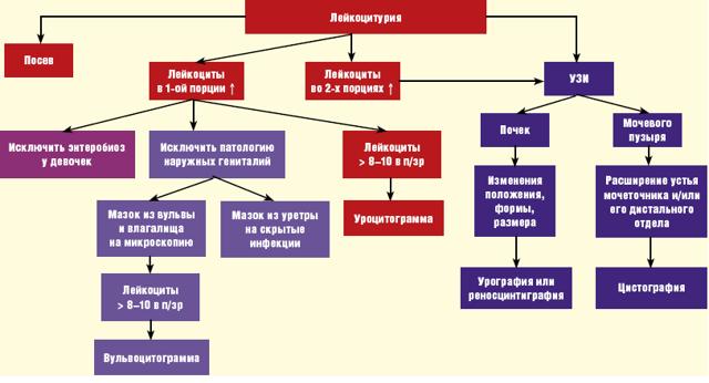 Лейкоцитоз при беременности: почему у беременных бывают повышены лейкоциты