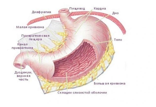 Классификация гастритов: стадии заболевания и его формы разных вариантов