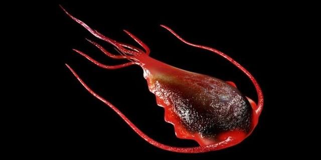 Кровь на гельминты и лямблии: как сдавать анализ детям, подготовка