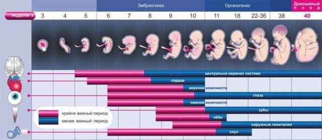 Дата зачатия ребёнка