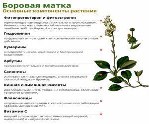 Травы от миомы матки