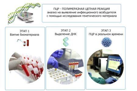 Кровь на сифилис: откуда берут, как сдавать на исследование