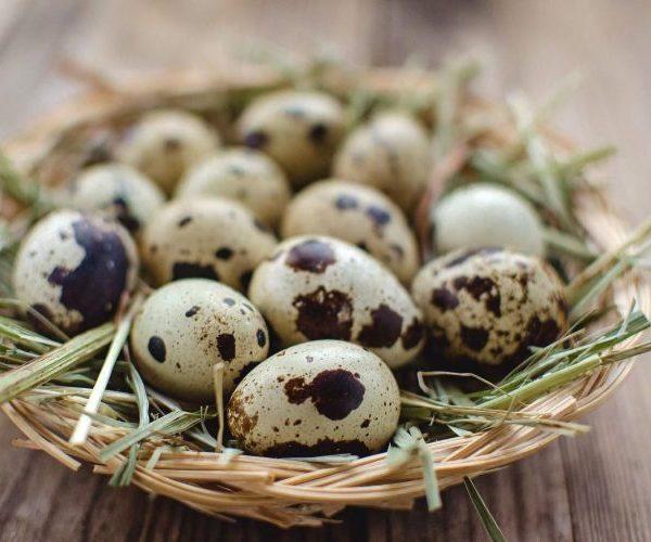 Лечение желудка перепелиными яйцами: в каком количестве и виде употреблять