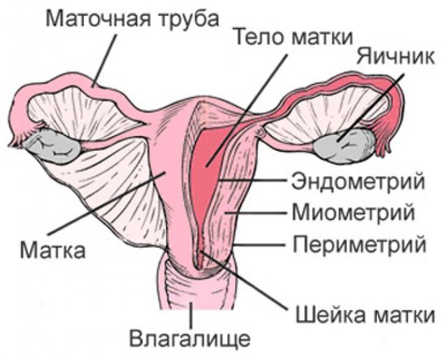 Симптомы эндометрита