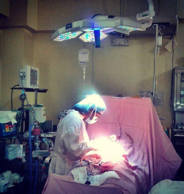 Пересадка матки