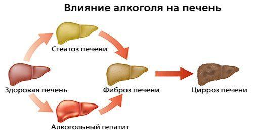 Коньяк повышает или понижает давление, сужает или расширяет сосуды