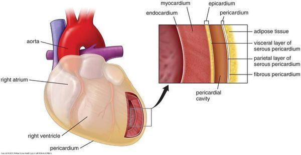 Миокардиодистрофия сердца: симптомы, лечение, классификация и виды